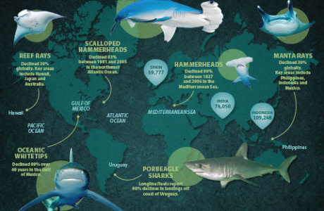 Map of Sharks and Rays